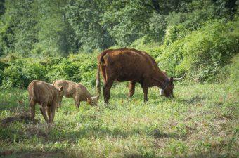 Pastures 20_87