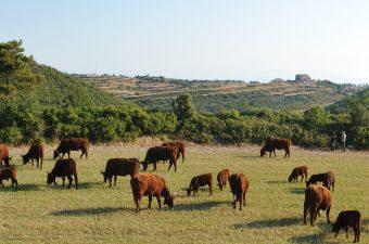 pastures_067